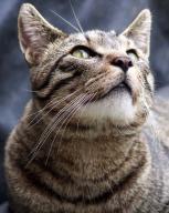 animal;-cat,-kitty,-