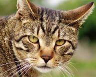 animal;-cat;-kitty