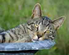 animal;animals;cat;feline;resting-cat;napping-cat;peaceful-cat;cats