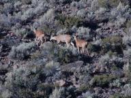 Bodie;State;Park;deer;animal