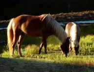 animal;horse