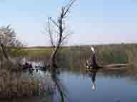bird;birds;Colusa-Plains;freshwater-marsh;marsh;migratory-birds;National-Wildlife-Refuge;riparian-woodlands;Sacramento-National-Wildlife-Refuge;seasonal-marsh;vernal-pools;wetlands;wildlife-viewing;Willows-CA;heron