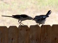 beak;bird;birds;feather;feathers