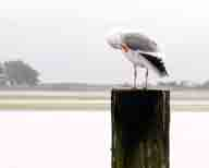 Bodega-Bay;Sonoma-County;Sonoma-Coast;California-Coast;coastal;coastline;gulls;seagull;bird