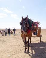egypt;-giza;-giza-plateau;-plateau;-horse;-carriage;-people