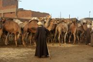 egypt;-cairo;-market;-camel;-camel-market;-camels;-herding;-working;-local;-people