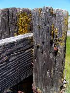 fence-post;lichen;barb-wire