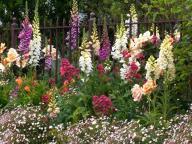 flower;flowers;garden