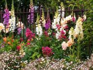 garden;flower;flowers