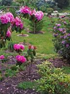 flowers;garden;spring;rhododendron;azalea;park