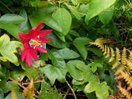 flower;flowers
