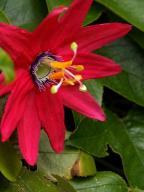 flowers;dogwood
