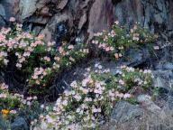 wildflower;wildflowers