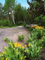 Asteraceae;Wyethia-mollis;Mules-Ears-or-Indian-Wheat;wildflowers;flowers