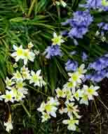 flowers;flower;blue-Bells;lilly