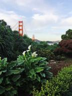 Golden;Gate;Bridge;dawn;San;Francisco;bridge;flower;