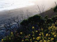 coast;-pacific-coast;-ocean;-shoreline;-pacific;-coastline;-california-coastline;-california-coast;-sonoma-county;-sonoma;-flowers