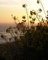 coast;-pacific-coast;-ocean;-shoreline;-pacific;-coastline;-california-coastline;-california-coast;-sonoma-county;-sonoma;-sunset;-flowers